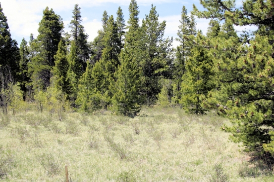 Foxtail Pines Lot 127 Land