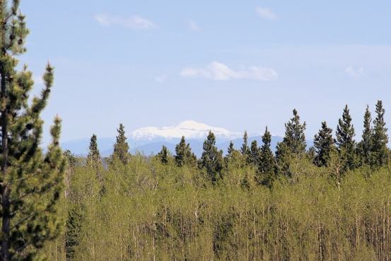 Foxtail Pines Lot 127 Pikes Peak View