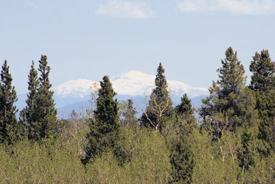 Foxtail Pines Lot 127 View of Pikes Peak